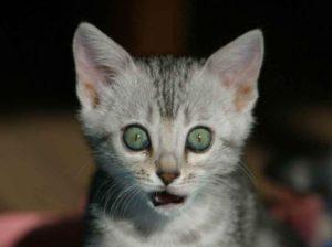 kat, frank jacobs
